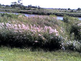 2009092101.jpg